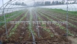 江苏邳州草莓N80
